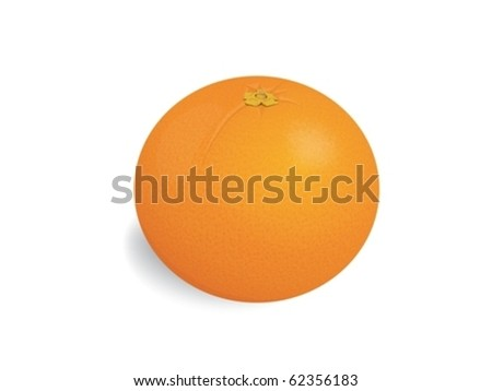 Fresh tropical fruit - orange - stock vector
