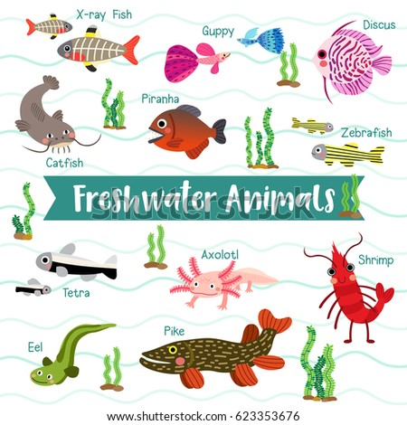 List Of Freshwater Fish Beginning With K | Animals Name A To Z