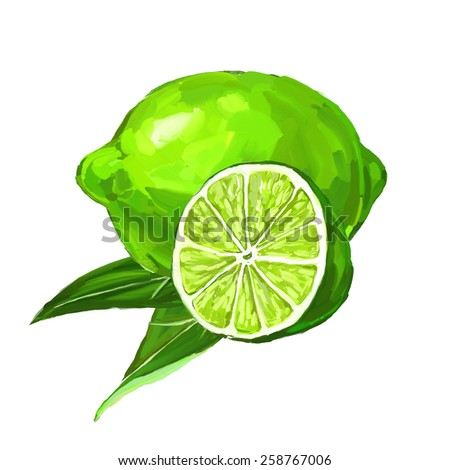 fruit lime Vector illustration  hand drawn  painted watercolor  - stock vector