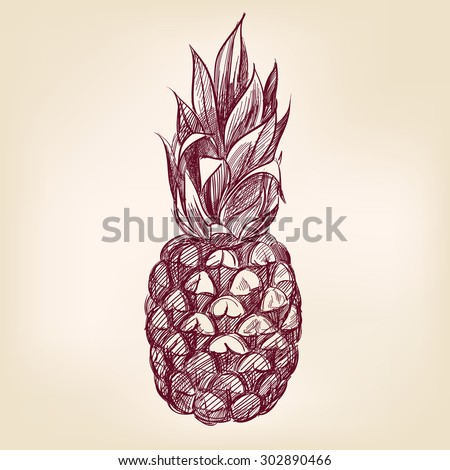 fruit pineapple hand drawn vector llustration realistic sketch - stock vector