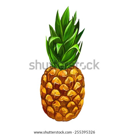 fruit pineapple  vector illustration  hand drawn  painted watercolor - stock vector