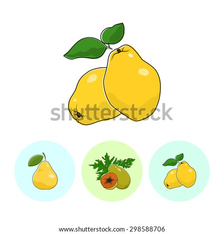 Fruit  Quince  on White Background , Set of Three Round Colorful Icons Pear , Papaya and Quince , Vector Illustration - stock vector