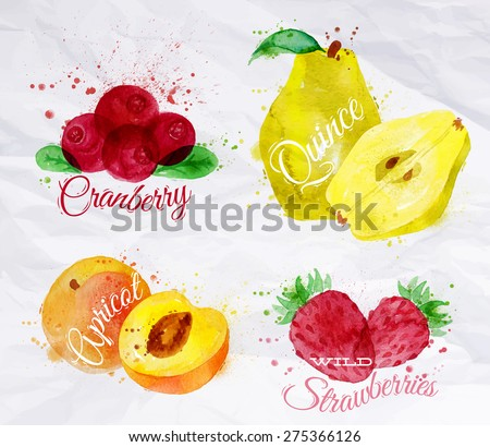 Fruit set drawn watercolor blots and stains with a spray cranberry, quince, apricot, wild strawberries - stock vector