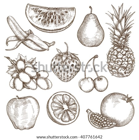 Fruit, sketches, hand drawing, vector set - stock vector