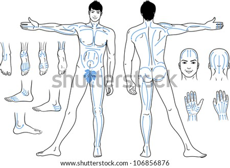 Full length (front & back) views of a standing naked man with massaging lines isolated on white background - stock vector