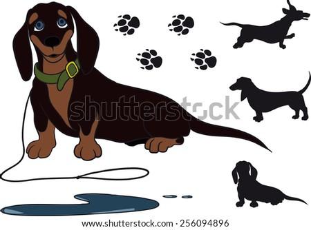 funny dachshund sitting short hair. She just pee - stock vector
