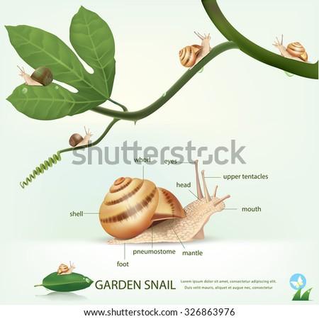 Garden snail on a branch, isolated on white.vector - stock vector