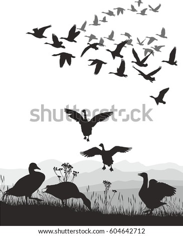 Geese - winged migration