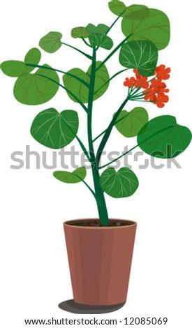 geranium - paint from nature - stock vector
