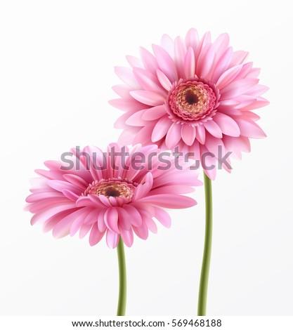 Gerbera flower isolated on white background stock vector 569468188 gerbera flower isolated on white background stock vector 569468188 shutterstock mightylinksfo Choice Image
