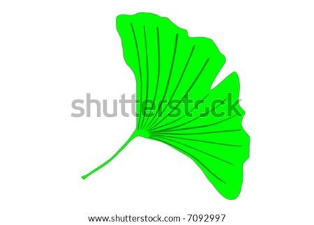 Ginkgo biloba tree green leaf vector graphics - stock vector