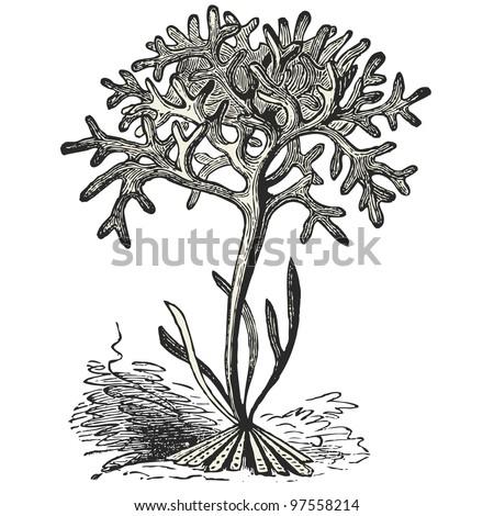 """Ginko biloba leaf - vintage engraved illustration - """"Dictionnaire encyclopédique universel illustré"""" By Jules Trousset - 1891 Paris - stock vector"""