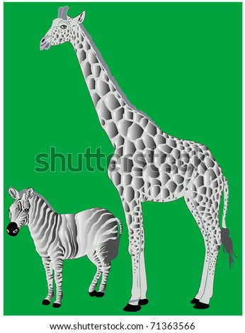 Giraffe and zebra - stock vector