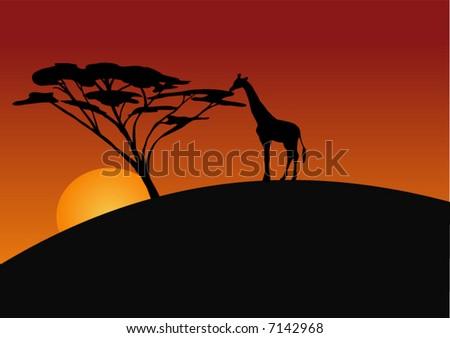 Giraffe silhouette - stock vector