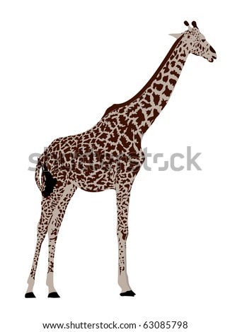 Giraffe. Silhouette on the white background