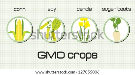 GMO crops, the most disseminated on the green background - stock vector
