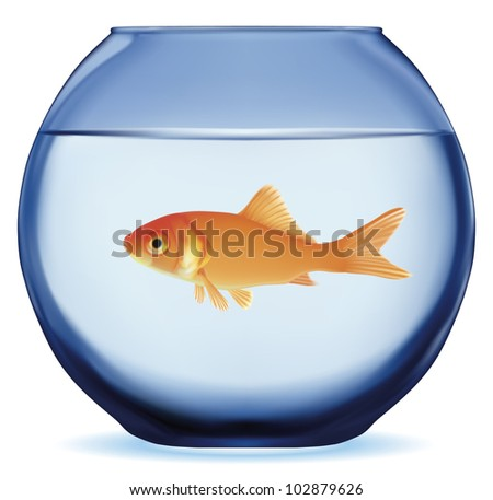 Gold fish swimming in the water in fishbowl. Vector EPS-10 - stock vector