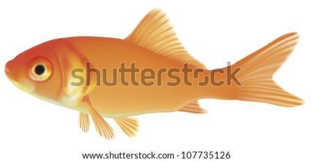 Gold fish. Vector EPS-10 - stock vector