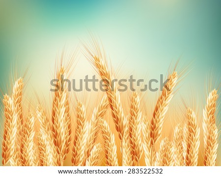Gold wheat field and blue sky. EPS 10 vector file included - stock vector