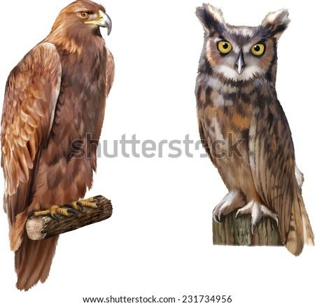 golden eagle (Aquila chrysaetos) orel skalni, An eagle owl sitting on the log. isolated on white background. Vector - stock vector