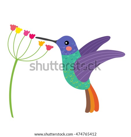 Golden tailed sapphire Hummingbird getting nectar from a flower animal cartoon character. Isolated on white background. Vector illustration.