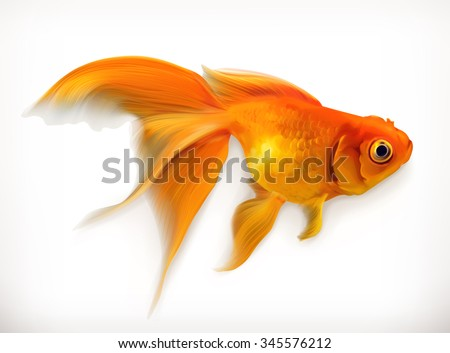 Goldfish, realistic vector illustration