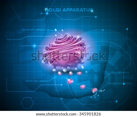 Golgi apparatus on an abstract technology background.