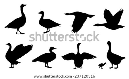 goose silhouettes on the white background - stock vector