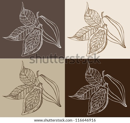 Graceful drawing of cocoa of beans. Vector illustration. Vintage collection - stock vector