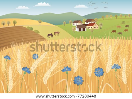 Grain fields - stock vector