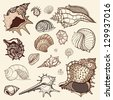 Grange Sea shells collection. Hand drawn vector illustration - stock vector