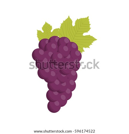 grape bunch fruit healthy vector illustration eps 10