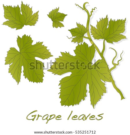Grape leaves isolated on white. Vector