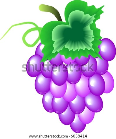 Grapes - stock vector