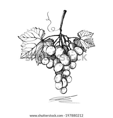 Grapes. Graphics. Illustration. Vector. - stock vector
