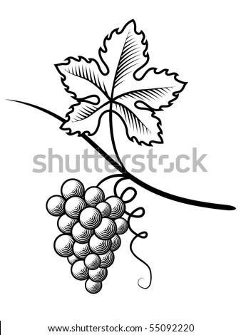Grapes.Imitation engraving - stock vector