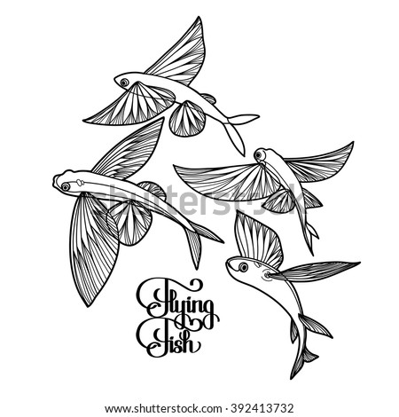 Graphic flying fish collection drawn in line art style. Sea and ocean creature isolated on white background. Coloring book page design for adults and kids - stock vector