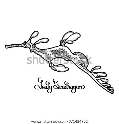 Graphic Leafy Seadragon drawn in a line art style. Sea horse. Ocean creature isolated on white background. Coloring book page design - stock vector
