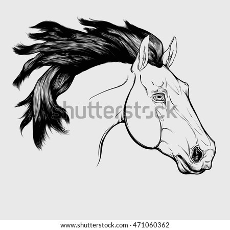 Graphic linear portrait of Friesian horse with a long mane. Head of stallion can be used as tattoo. Vector isolated on a light gray background.
