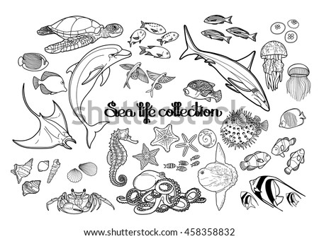 Graphic Sea Life Collection Vector Ocean Creatures Isolated On White Background Coloring Book Page
