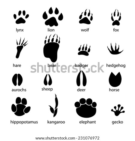 graphic set of animal footprints on a white background  - stock vector