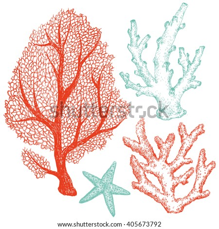Graphic set of marine life, coral, starfish, dudling handmade drawing, isolated vector object