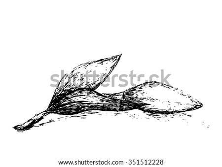 Line Drawing Vector Graphics : Graphic tulip flower sketch hand drawn stock photo vector