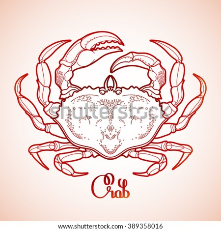 Graphic vector crab drawn in line art style. Sea and ocean creature isolated in red colors. Top view. Seafood element. Coloring book page design