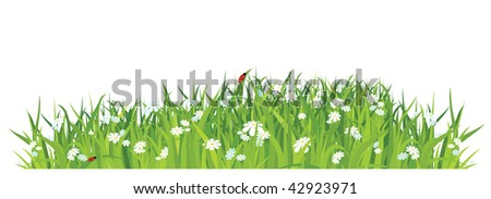 grass and flowers on white background / horizontal / vector - stock vector