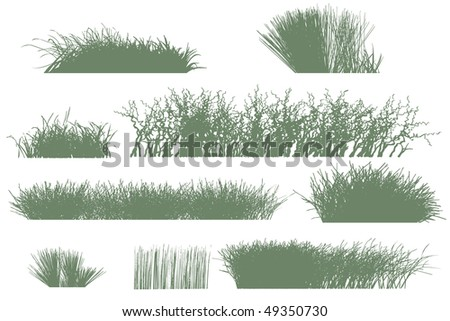Grass  silhouettes - stock vector