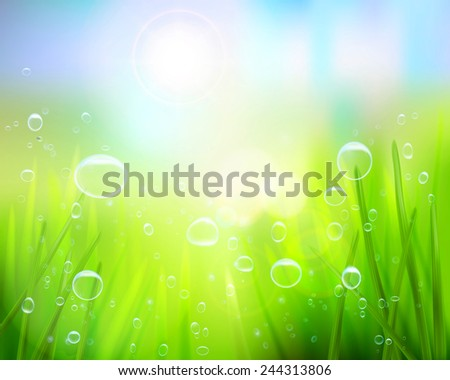 Grass with water drops. Vector illustration. - stock vector
