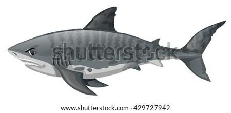 Gray shark looking angry illustration