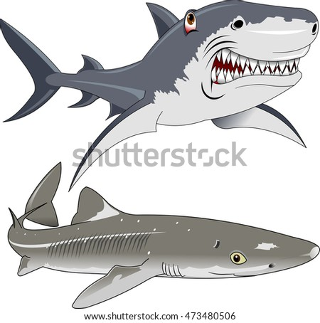 Great white shark and dogfish on a white background, vector