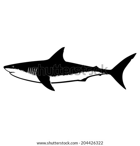 Great White Shark Silhouette Isolated on White - stock vector